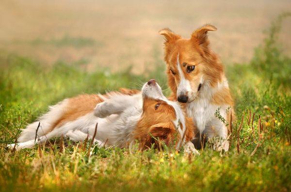 5 Conseils pour gagner du temps pour choisir une police d`assurance pour animaux de compagnie