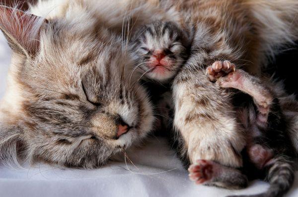 5 Conseils sur la nutrition appropriée pour votre chat enceinte