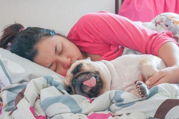6 Moyens économiques pour créer un lien avec votre chien