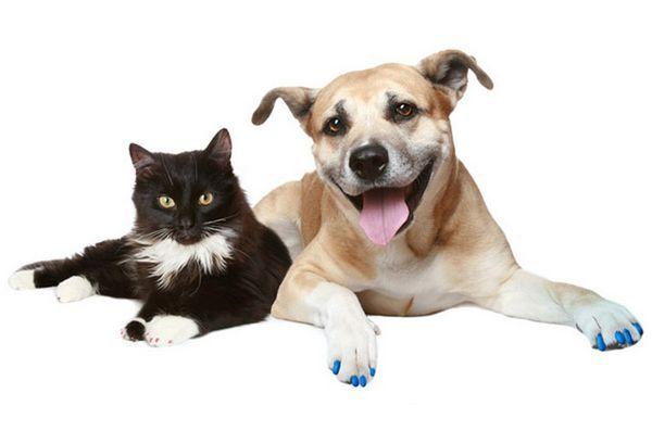 Couvre-ongles pour animaux de compagnie