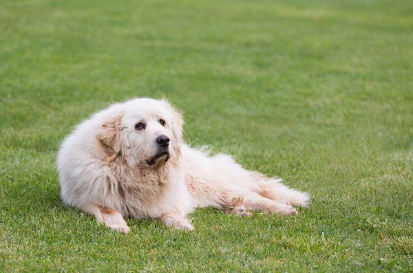 6 Foire aux questions sur l`arthrose canine
