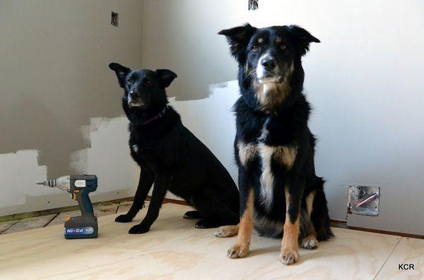 6 Conseils pratiques lors de la rénovation avec des chiens dans la maison