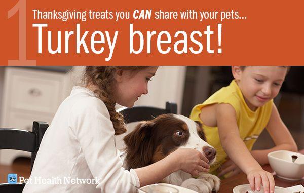 6 Friandises de Thanksgiving que vous pouvez partager avec vos animaux de compagnie!