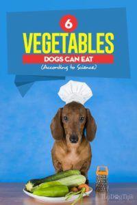 6 Légumes que les chiens peuvent manger selon la science