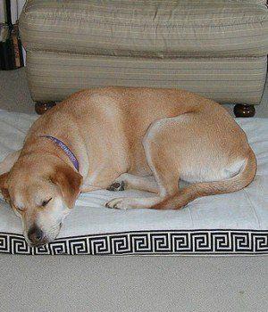 6 Conseils sur la façon de soigner les chiens âgés