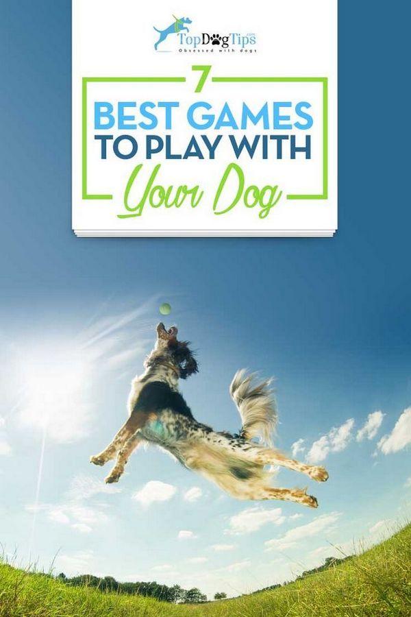 7 Meilleurs jeux pour jouer avec des chiens