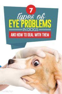 7 Problèmes oculaires chez les chiens et comment y faire face