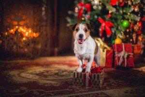 Chien Noël présente