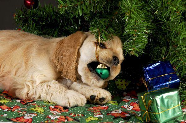 7 Conseils de sécurité pour un sapin de Noël à l`épreuve des chiens
