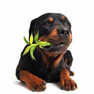 Plancher en bambou pour chiens