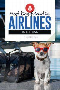 8 La plupart des compagnies aériennes amies des chiens
