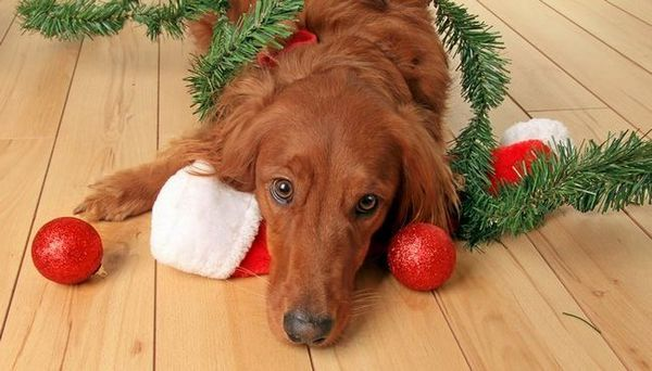 8 Façons de protéger votre maison pour Noël