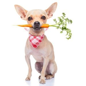 Superfoods pour chiens