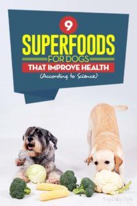 Les superaliments pour les chiens qui améliorent leur santé