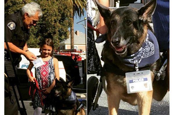 Le membre honoraire du chien k9 sert et protège sa fille