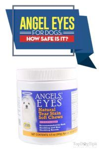 Angel eyes pour chiens: est-ce sans danger pour les animaux?