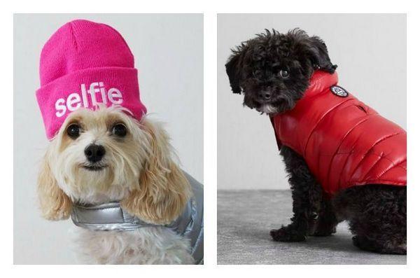 La blague du poisson d'avril est désormais une véritable ligne de vêtements pour chiens dans les pourvoiries américaines «beagle»