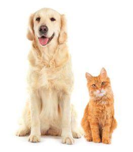 Les chiens sont-ils plus intelligents que les chats? De nouvelles recherches indiquent oui