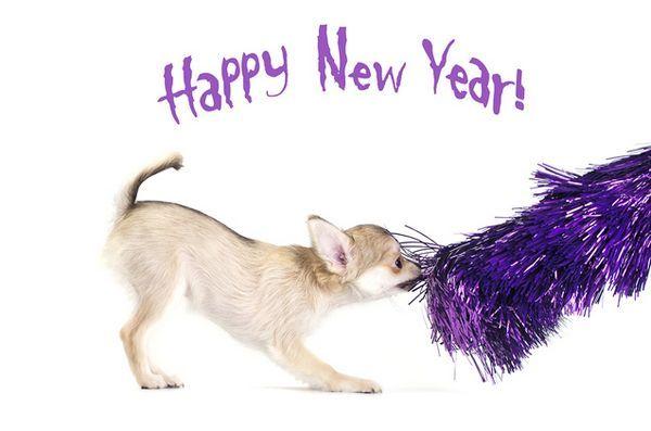 Demandez aux dogfathers velues: les résolutions du nouvel an 2016