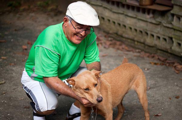 Demandez aux chiens de chien poilus: tout ce qui manque de comportement