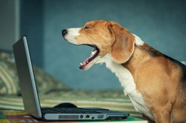 Demandez aux dogfathers velues: le sur-partage des animaux sur facebook
