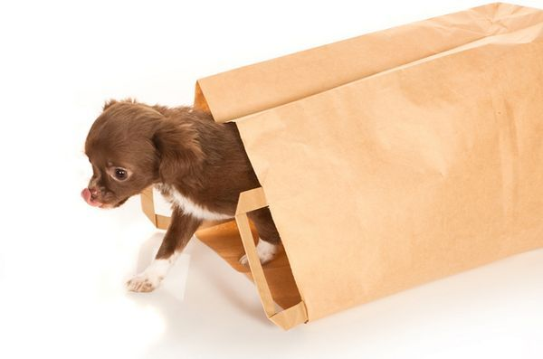 Demandez aux dogfathers poilus: doggy bag deal breaker?