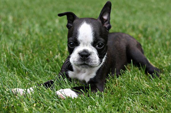 Demandez aux dogfathers velues: baver pour aller au parc à chien