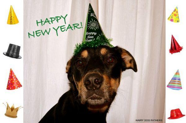 Demandez aux dogfathers velus: les résolutions du nouvel an
