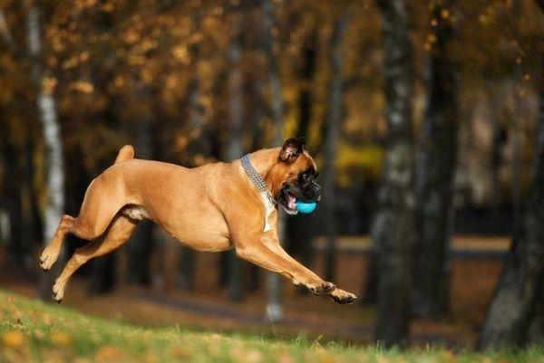 Demandez aux chiens de chien poilus: les opinions suscitent l`ignorance