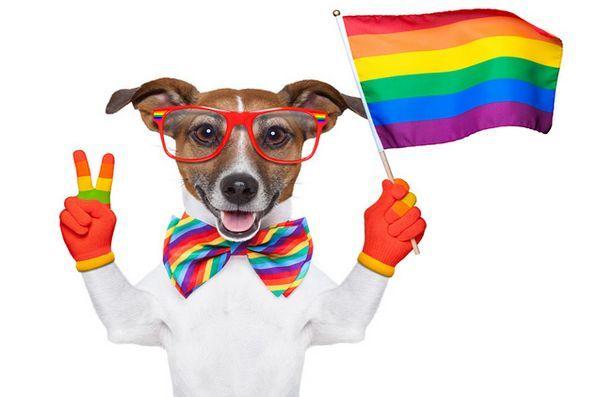 Demandez aux chiens de chien poilus: montrer ma fierté de chien