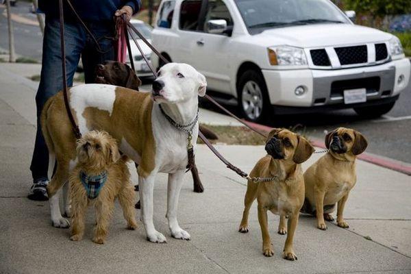 Demandez aux dogfathers velues: tirer sur les promenades et les cordes
