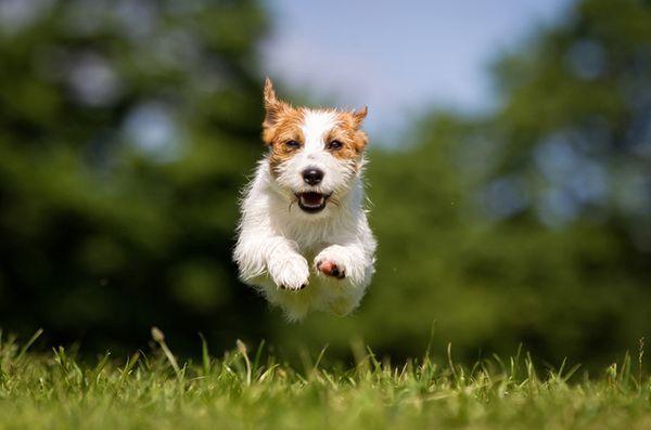 Demandez aux dogfathers velues: chien déchaîné, une menace du voisinage
