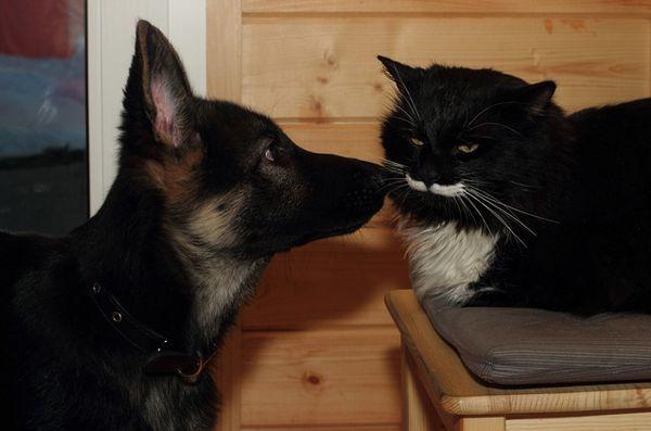 Demandez aux pères de chien poilus: invité de maison indésirable?