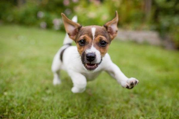 Demandez aux dogfathers velus: pourquoi a-t-elle magasiné au lieu d`adopter?