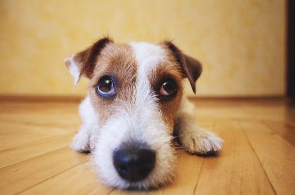L`autisme chez le chien: mythe ou raison de s`inquiéter?