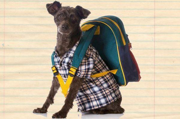 Les cours de retour à l'école canine garantissent que votre chien est l'animal de compagnie du professeur