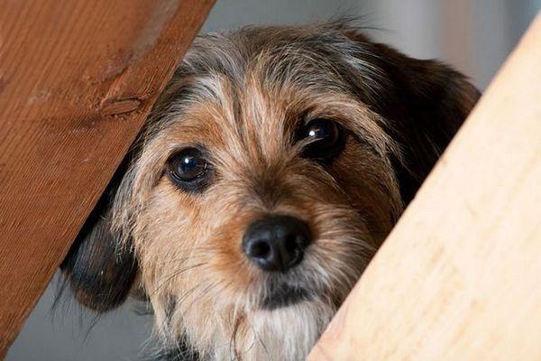 Livre de dressage de chien craintif