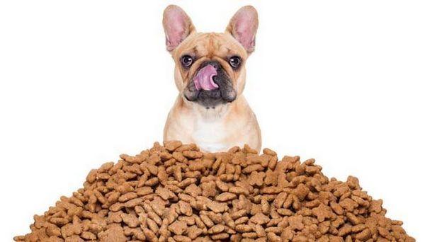 Meilleures offres de nourriture pour chien ce Noël