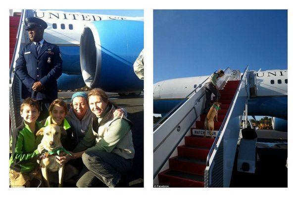 Le chien de sauvetage de Biden reçoit le traitement v (i) p sur la force aérienne deux