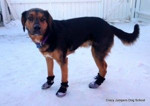 chien-boot-tips-1