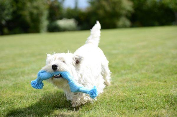 Les jouets interactifs super-sensoriels Buster stimulent mentalement votre chien