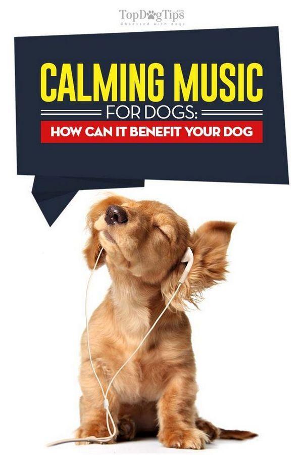 Musique apaisante pour chiens - qu`est-ce que c`est et comment peut-il bénéficier à votre chien