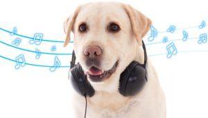 Musique apaisante pour chiens