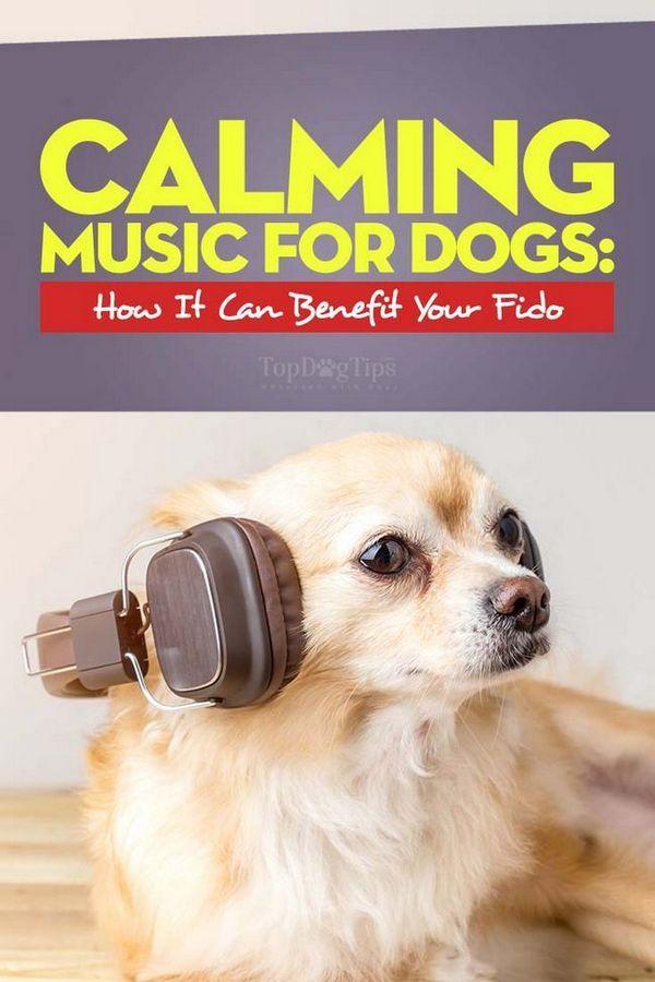 Musique apaisante pour chiens - Qu`est-ce que c`est et comment cela peut-il bénéficier à votre chien