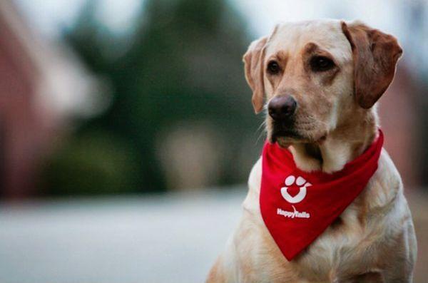 Les chiens de thérapie peuvent-ils aider à réduire les médicaments chez les enfants préopératoires?