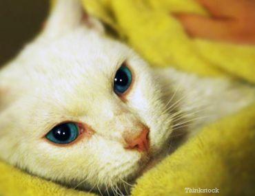 Cat survit à une chute du 11ème étage