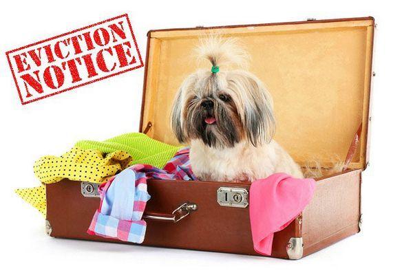 Certaines races obtiennent le soutien de coopératives de luxe, les propriétaires crient «racisme de chien»