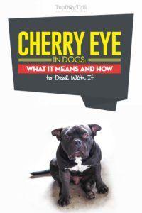 Oeil de cerise chez le chien: ce que cela signifie et comment y faire face