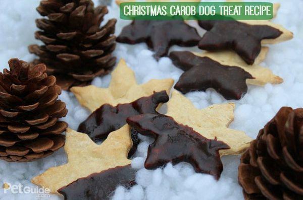 Recette de friandise pour chien de Noël