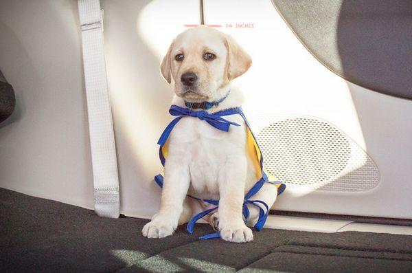 Chrysler lance «donner du travail à un chien» pour des compagnons canins d'indépendance
